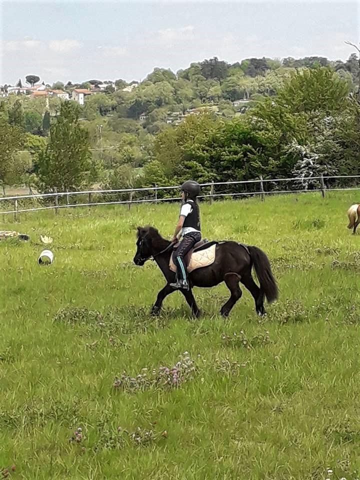 poney cross toulouse centre equestre