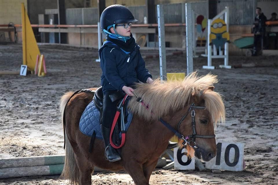 Poney au CSO du poney-club ALERT à Montrabé proche de Toulouse